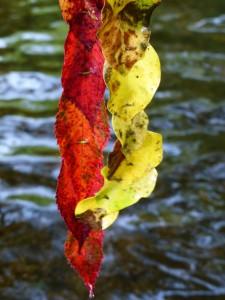 Feuilles d'automnes 1